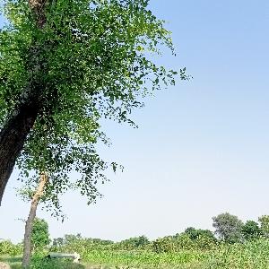 Muhammad Nasir Khan